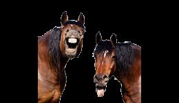 Häst & Ridsport
